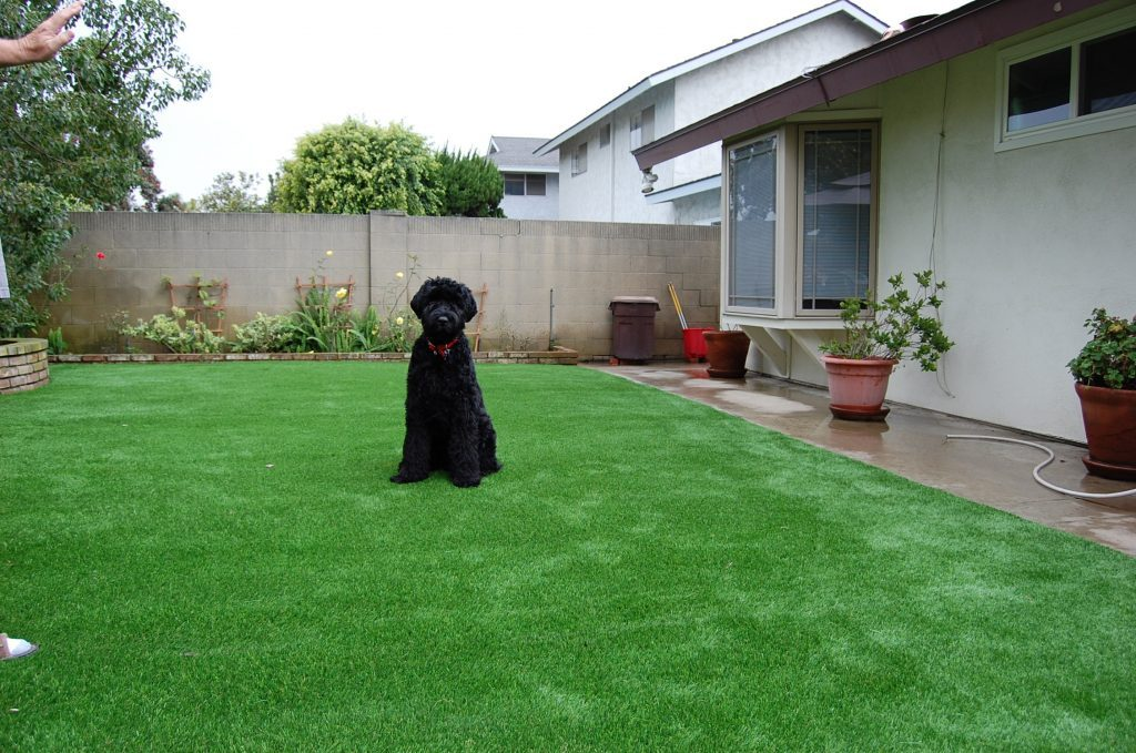 Synthetic Lawn Pet Turf San Diego, Top Rated Artificial Grass Installation for Dogs