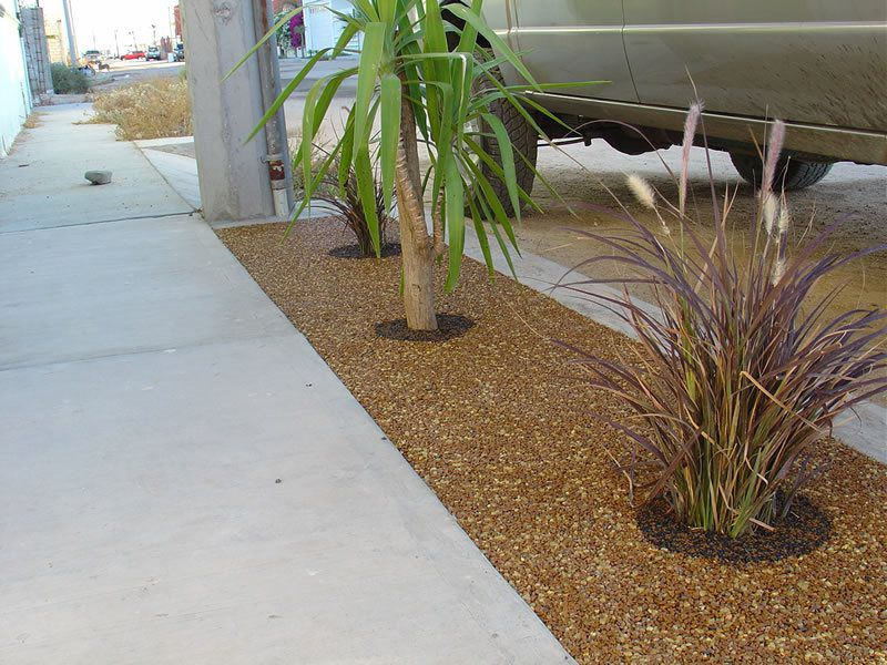 Porous Tree Well Installation Services San Diego, Tree Well Maintenance and Cleaning